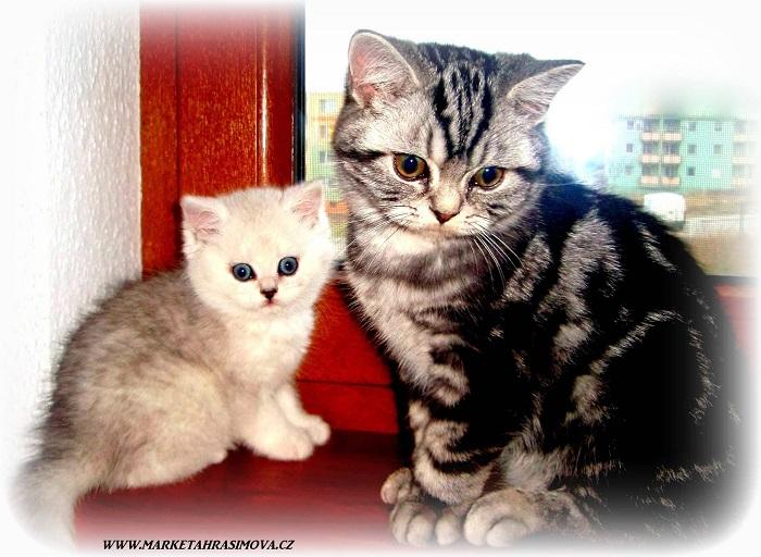 Z deníku kočičky Ťapičky