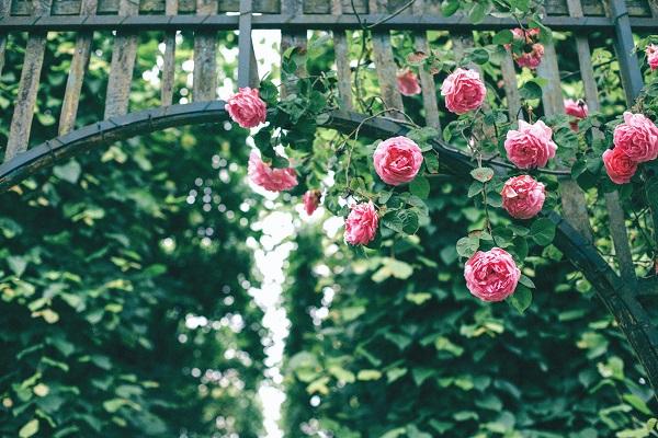 Ordinace v Růžovce a autismus